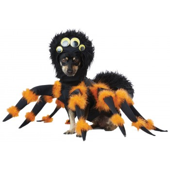 Black Orange Pet Dog Spider Costume.jpg