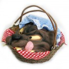 Basket with Wolf's Head Little Red Riding Hood  Costume Prop_thumb.jpg