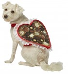 Chocolate Box Pet Costume_thumb.jpg