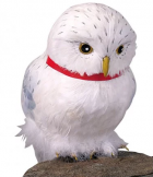 Harry Potter Owl (Hedwig Prop)_thumb.jpg